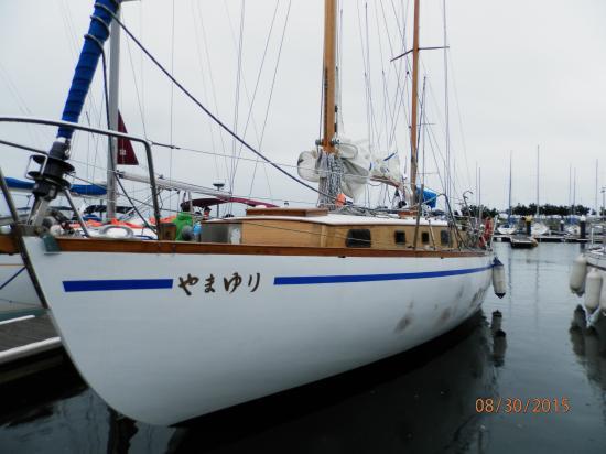 帆船山百合.JPG