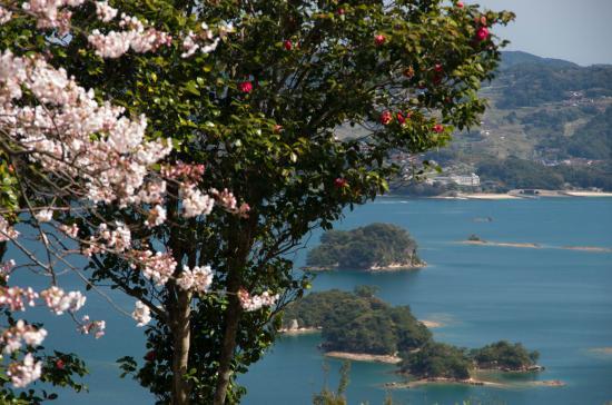 桜と椿とイロハ島IMGP0808.jpg