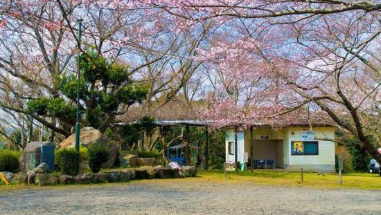 IMGP3793-桜と歌碑.jpg