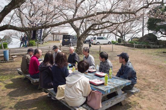 6 五分咲きの桜の下で花見 75.jpg